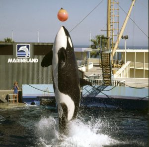 Los Angeles Marineland 1986